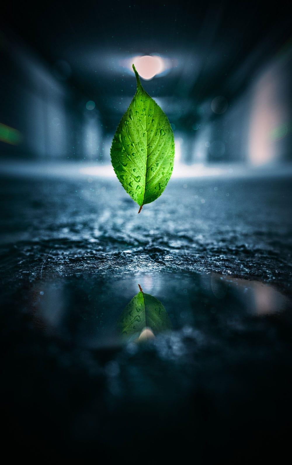 Litz_nachhaltig